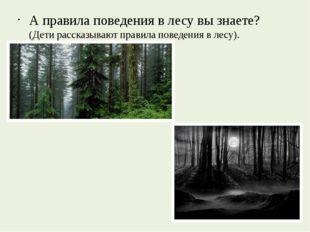 А правила поведения в лесу вы знаете? (Дети рассказывают правила поведения в