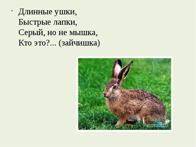 Длинные ушки, Быстрые лапки, Серый, но не мышка, Кто это?... (зайчишка)