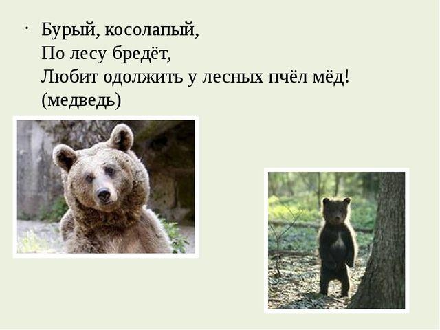 Бурый, косолапый, По лесу бредёт, Любит одолжить у лесных пчёл мёд! (медведь)