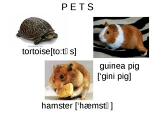 P E T S tortoise[to:təs] guinea pig ['gini pig] hamster ['hæmstə]