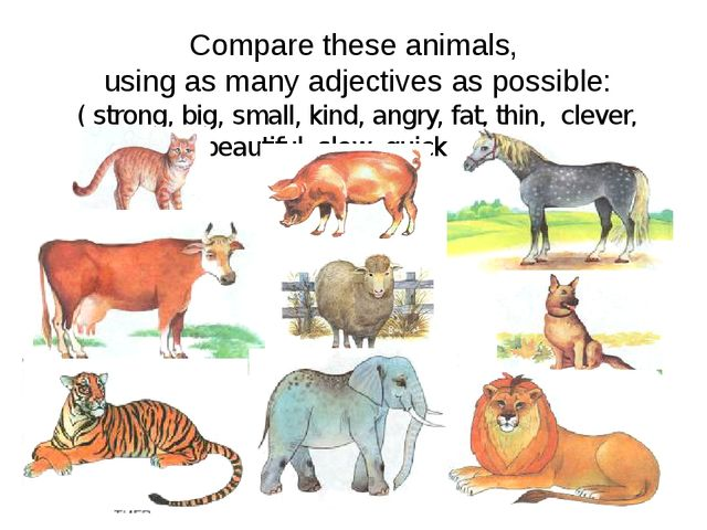 Compare these animals, using as many adjectives as possible: ( strong, big, s...