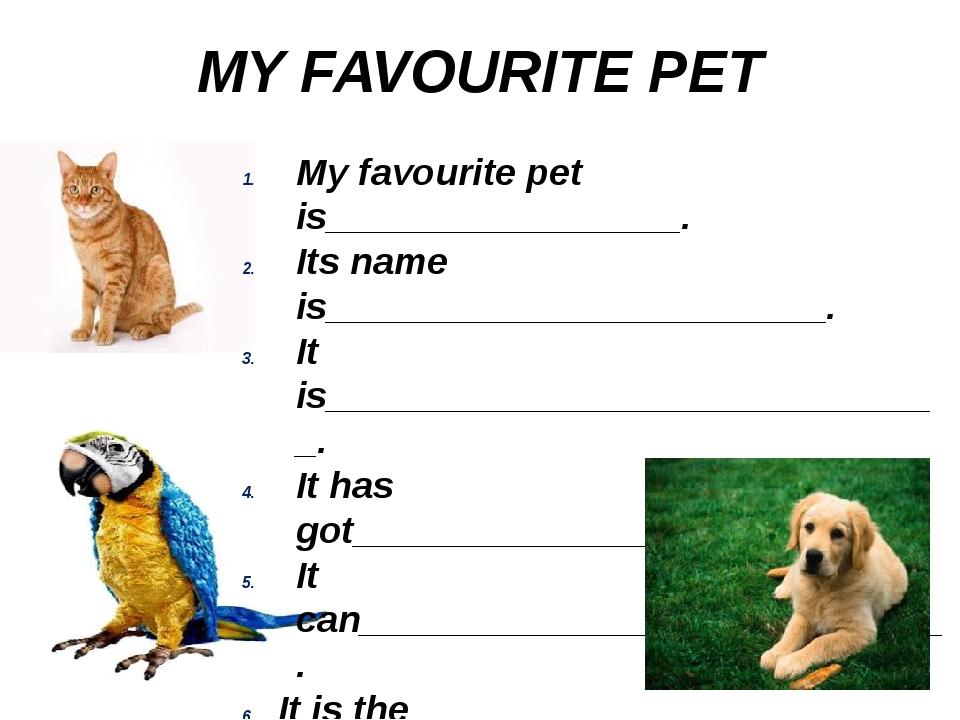 MY FAVOURITE PET My favourite pet is_________________. Its name is___________...