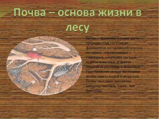 Почва – жизненно важная часть природы. Она состоит из фрагментов материнской