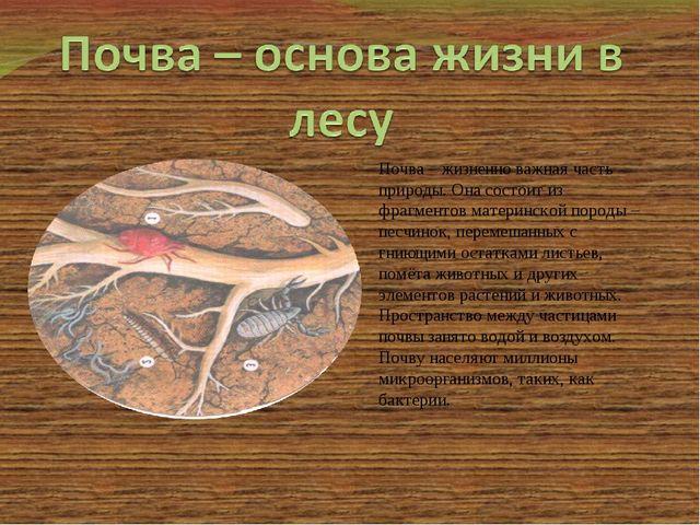 Почва – жизненно важная часть природы. Она состоит из фрагментов материнской...