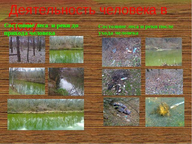 Деятельность человека в лесу Состояние леса и реки до прихода человека Состоя...