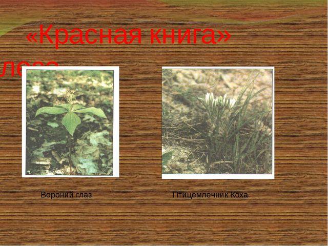 «Красная книга» леса Птицемлечник Коха Вороний глаз