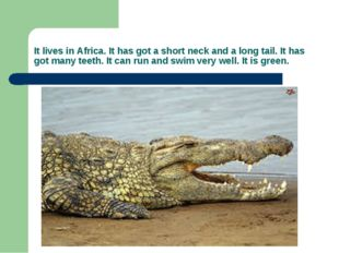 It lives in Africa. It has got a short neck and a long tail. It has got many