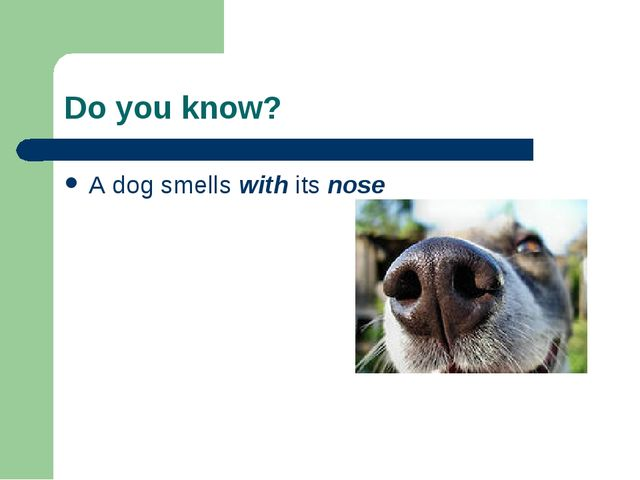 Do you know? A dog smells with its nose