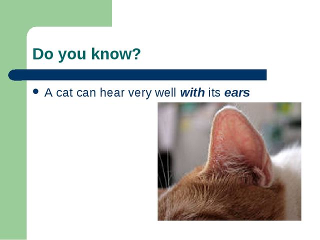 Do you know? A cat can hear very well with its ears