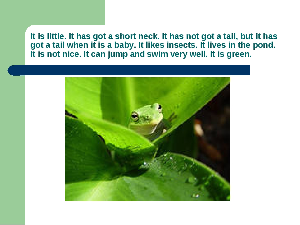 It is little. It has got a short neck. It has not got a tail, but it has got...