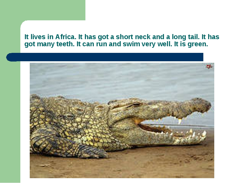 It lives in Africa. It has got a short neck and a long tail. It has got many...