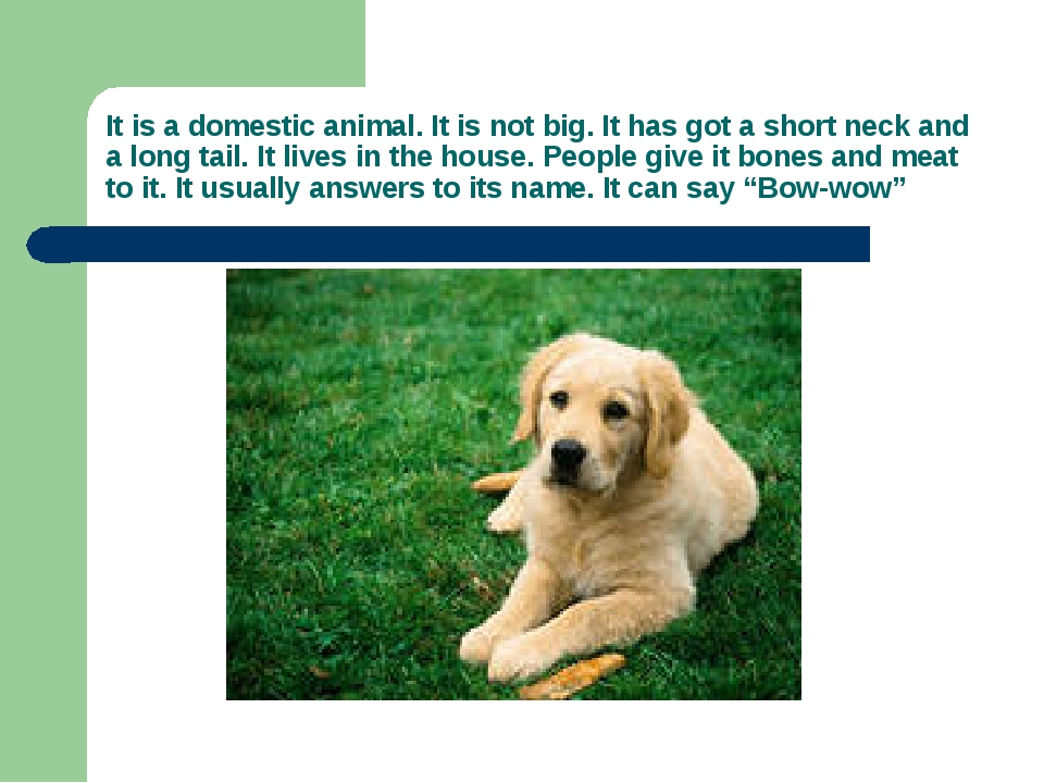 It is a domestic animal. It is not big. It has got a short neck and a long ta...