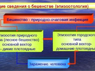 Общие сведения о бешенстве (эпизоотология) Бешенство - природно-очаговая инфе