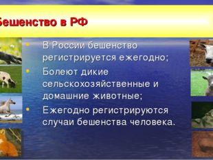 Бешенство в РФ В России бешенство регистрируется ежегодно; Болеют дикие сельс