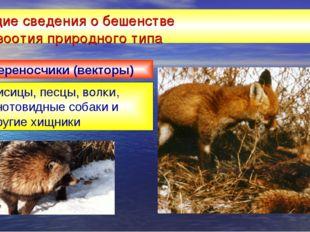 Общие сведения о бешенстве эпизоотия природного типа Лисицы, песцы, волки, ен