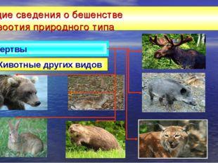 Общие сведения о бешенстве эпизоотия природного типа Животные других видов Же