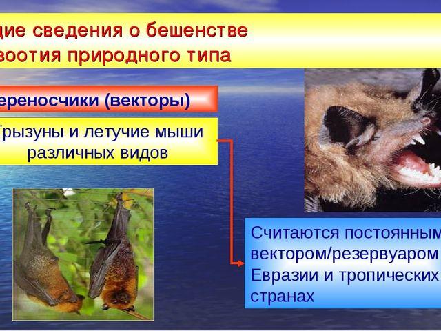 Общие сведения о бешенстве эпизоотия природного типа Грызуны и летучие мыши р...