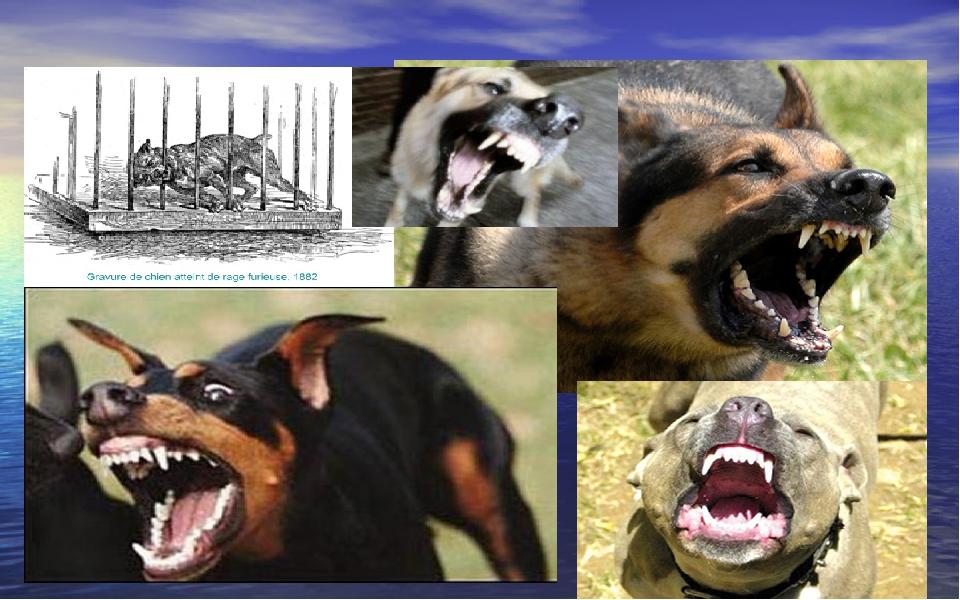 Клинические признаки бешенства у собак