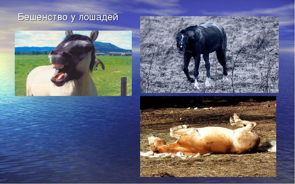 Бешенство у лошадей