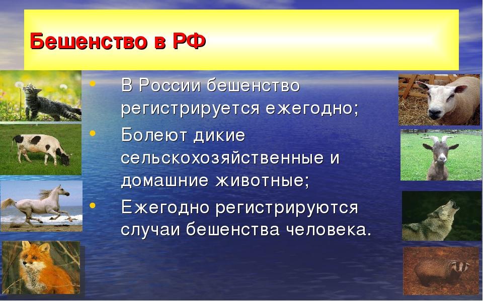 Бешенство в РФ В России бешенство регистрируется ежегодно; Болеют дикие сельс...