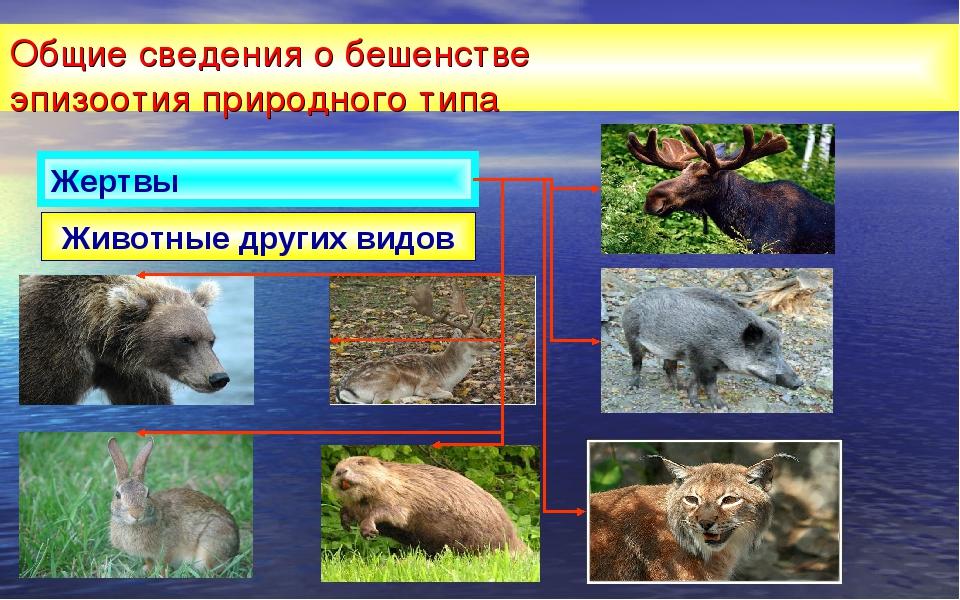 Общие сведения о бешенстве эпизоотия природного типа Животные других видов Же...