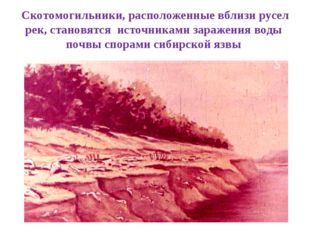 Скотомогильники, расположенные вблизи русел рек, становятся источниками зараж