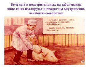 Больных и подозрительных на заболевание животных изолируют и вводят им внутри