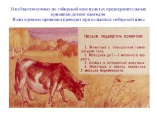 В неблагополучных по сибирской язве пунктах предохранительные прививки делают