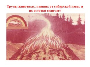 Трупы животных, павших от сибирской язвы, и их остатки сжигают