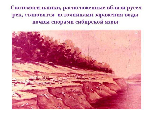 Скотомогильники, расположенные вблизи русел рек, становятся источниками зараж...
