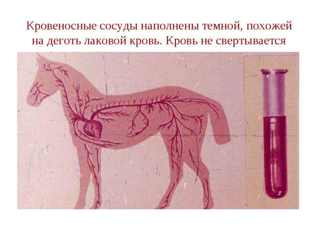 Кровеносные сосуды наполнены темной, похожей на деготь лаковой кровь. Кровь н...