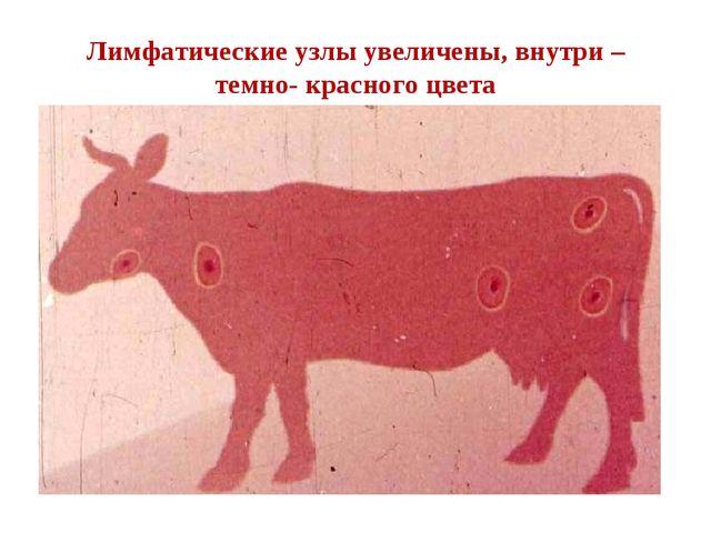 Лимфатические узлы увеличены, внутри – темно- красного цвета
