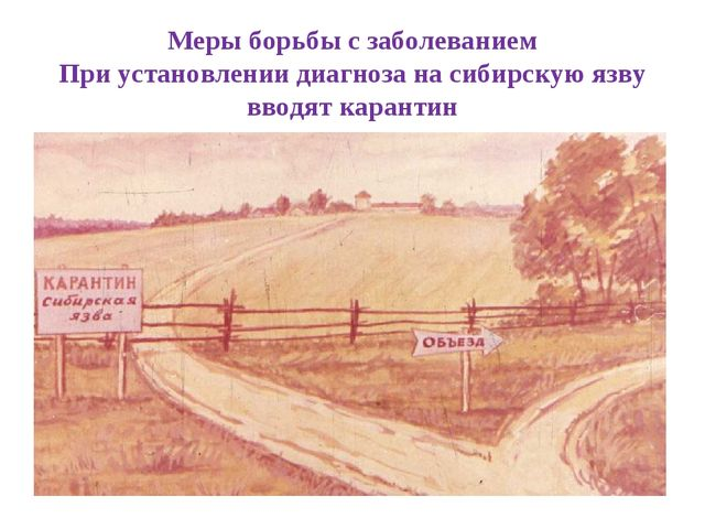 Меры борьбы с заболеванием При установлении диагноза на сибирскую язву вводят...
