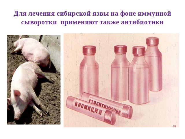 Для лечения сибирской язвы на фоне иммунной сыворотки применяют также антибио...