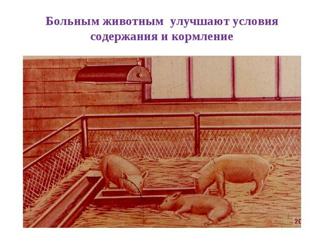 Больным животным улучшают условия содержания и кормление