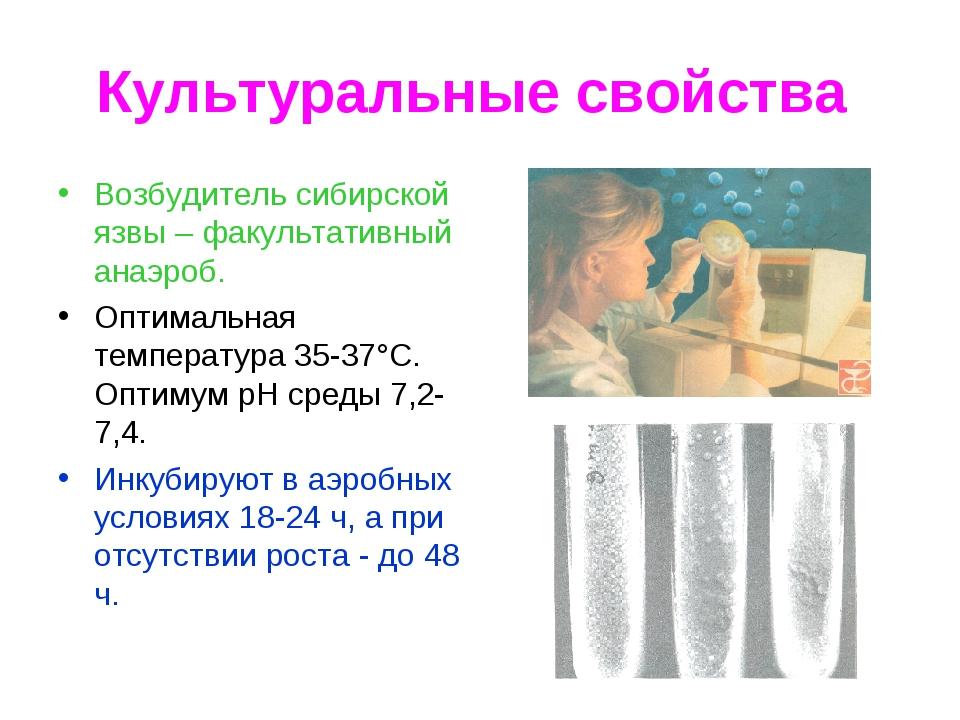Культуральные свойства Возбудитель сибирской язвы – факультативный анаэроб. О...