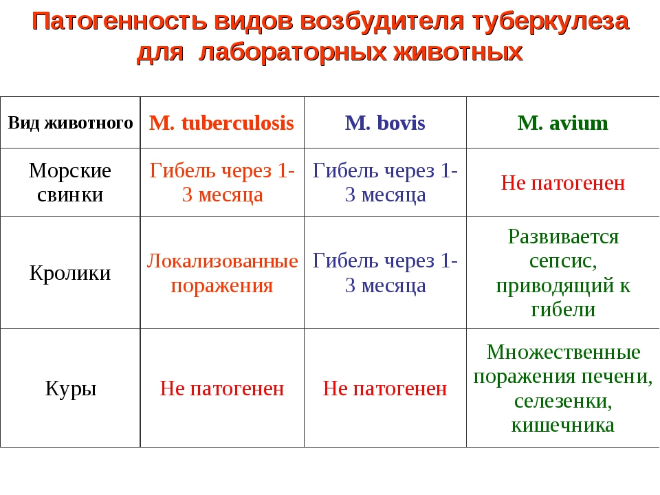 Патогенность видов возбудителя туберкулеза для лабораторных животных Вид живо...