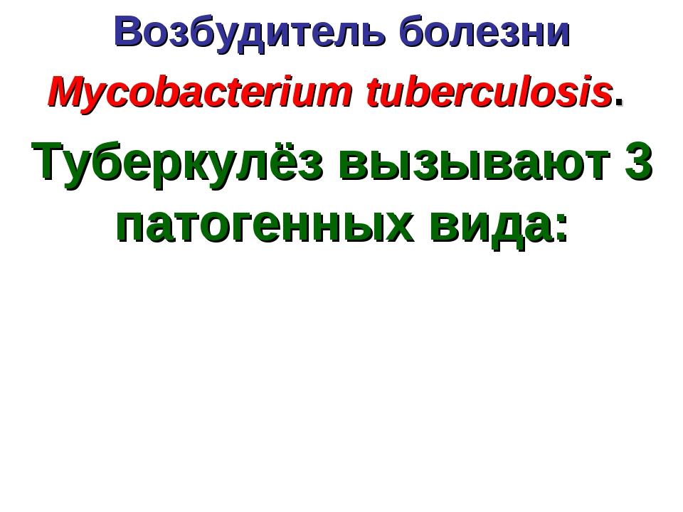 Возбудитель болезни Mycobacterium tuberculosis. Туберкулёз вызывают 3 патоген...