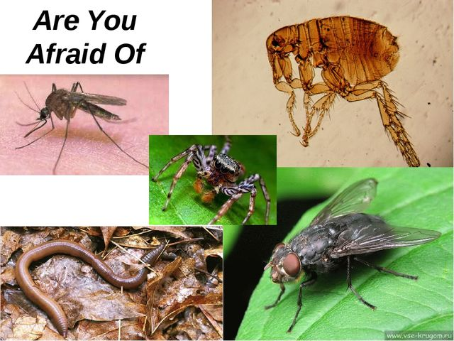 Are You Afraid Of Insects?