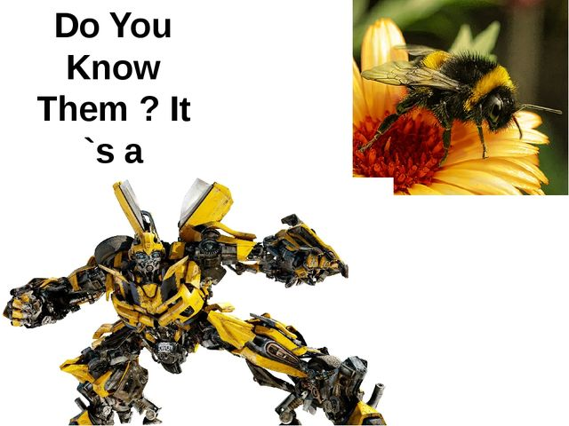 Do You Know Them ? It `s a Bumble-bee.