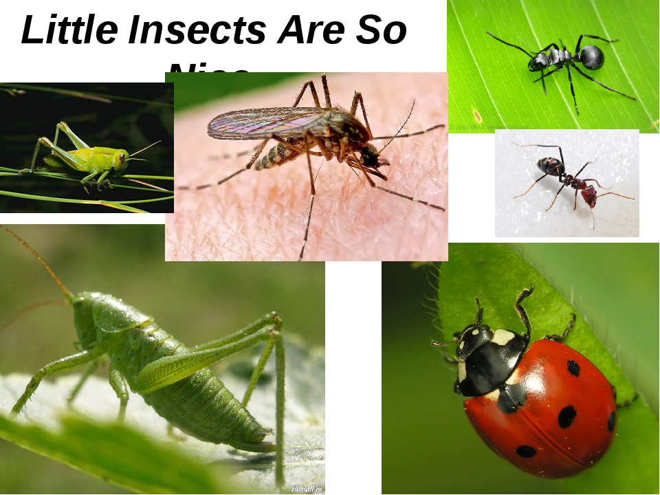 Little Insects Are So Nice.