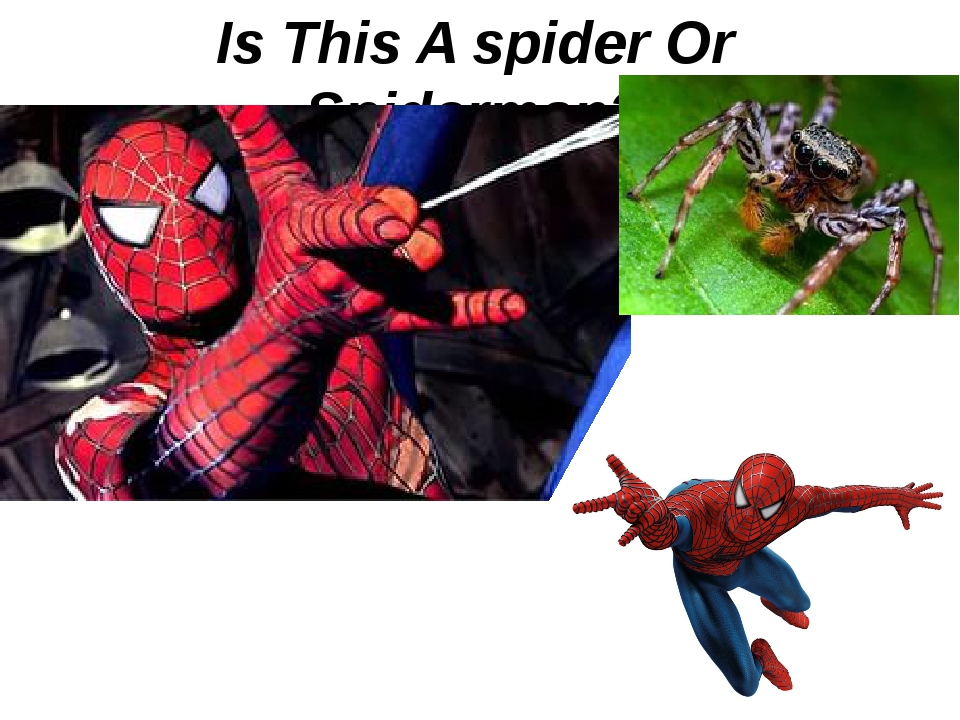 Is This A spider Or Spiderman?