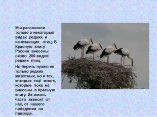 Мы рассказали только о некоторых видах редких и исчезающих птиц. В Красную к