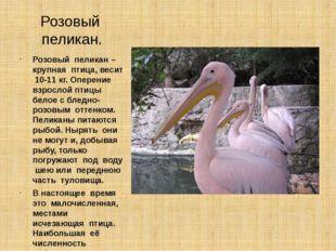 Розовый пеликан. Розовый пеликан – крупная птица, весит 10-11 кг. Оперение вз