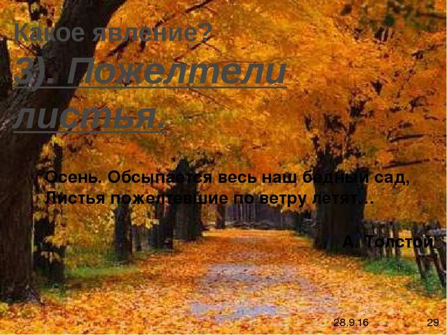 Осень. Обсыпается весь наш бедный сад, Листья пожелтевшие по ветру летят… А....