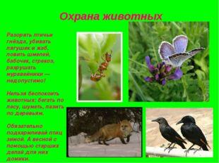 Охрана животных Разорять птичьи гнёзда, убивать лягушек и жаб, ловить шмелей