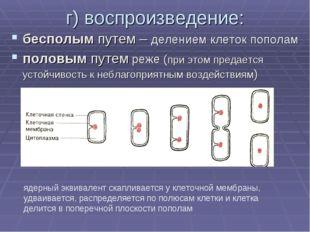 г) воспроизведение: бесполым путем – делением клеток пополам половым путем ре