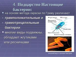 4. Подцарство Настоящие бактерии: на основе метода окраски по Граму различают