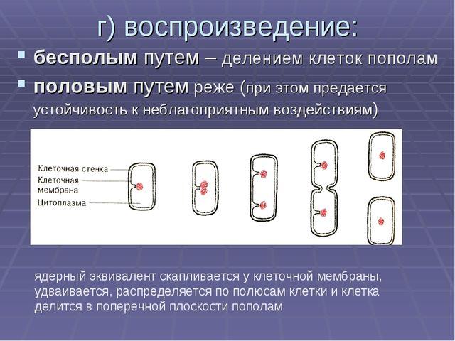 г) воспроизведение: бесполым путем – делением клеток пополам половым путем ре...
