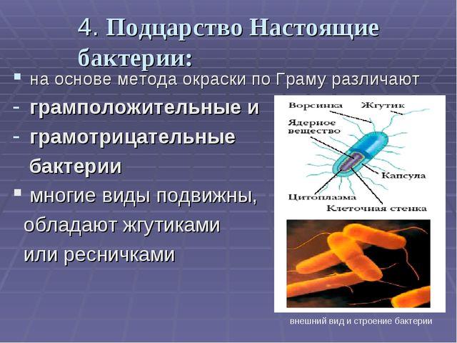 4. Подцарство Настоящие бактерии: на основе метода окраски по Граму различают...
